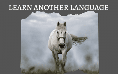STAND OUT – EXPLORE – LEARN ANOTHER LANGUAGE